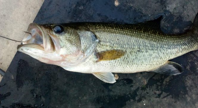 Early Bass Fishing: Change Can Produce Results!