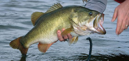 Tips To Catch A Trophy Bass This Fall