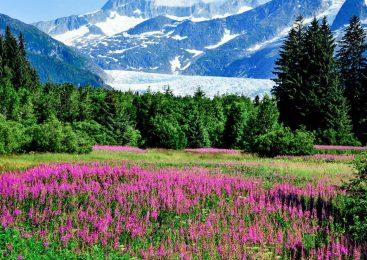 A Walk on the Wild Side: Hiking in Juneau, Alaska