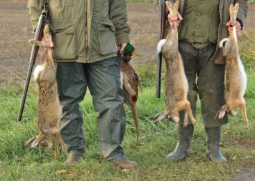 Essential Small Game Hunting Tips For Beginners